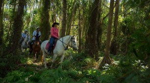 Green Island and Horse Riding