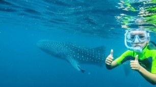 Ningaloo Reef Whale Shark Quest
