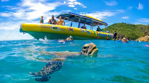 Get up close and personal to amazing sea life like Turtles!