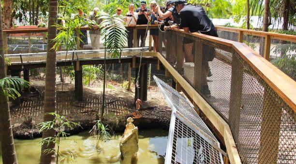 Crocodile Feeding Show