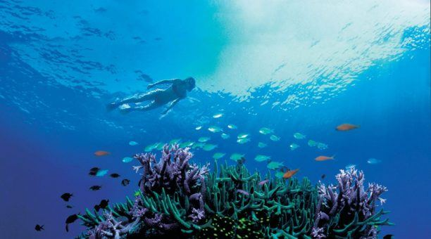 Snorkel over amazing fringing Coral Reef's